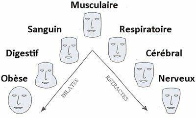 Morphotypes, Stéphanie Grosieux, thérapeute holistique, naturopathe, sophrologue sur Montpellier